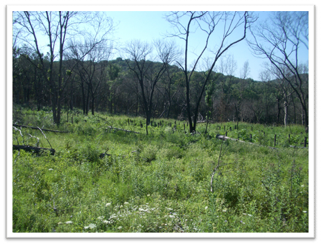 Missouri-River-Hills-COA-Burn-Area-After-Picture