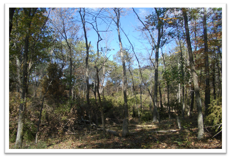 Missouri-River-Hills-COA-Timberstand-Improvement-Picture