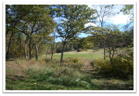 Missouri-River-Hills-COA-Woodland-Clearing-Picture